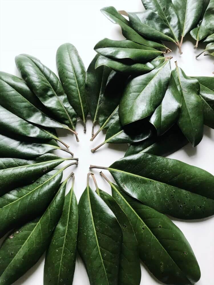 DIY magnolia leaf wreath