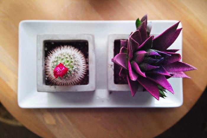 little garden gifts