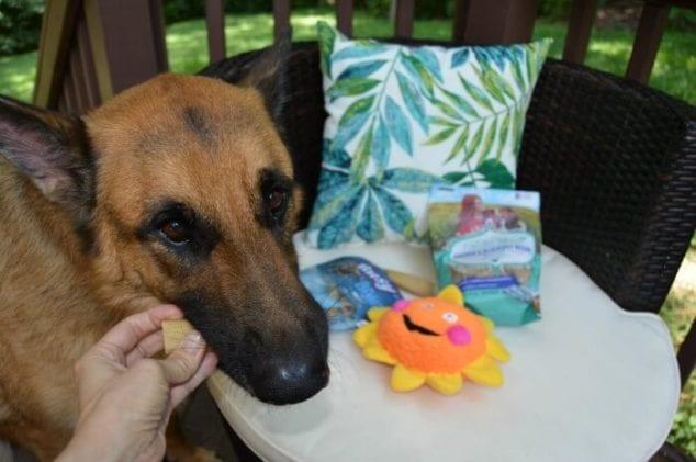safe bone dog treat