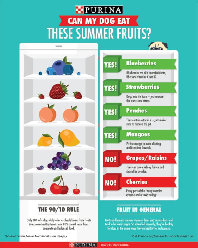 summer fruits safe for pets
