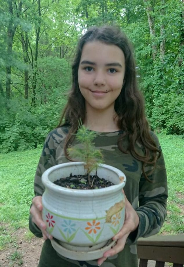 why planting trees is important